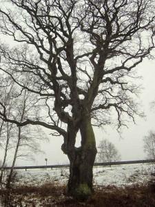Památné stromy na mých cestách po čr